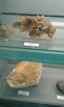 Col. Geologica_MVHN (31)